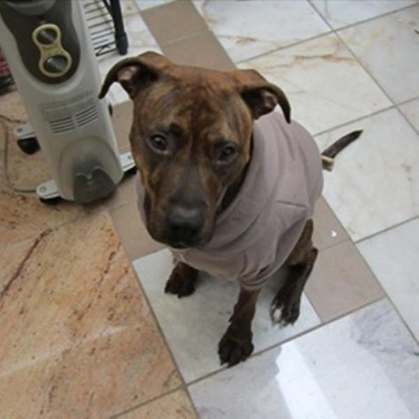 Large Pewter Fleece Doggie Hoodie
